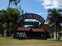 Tourist attractions in Negril