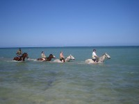 The best horseback tours in Jamaica